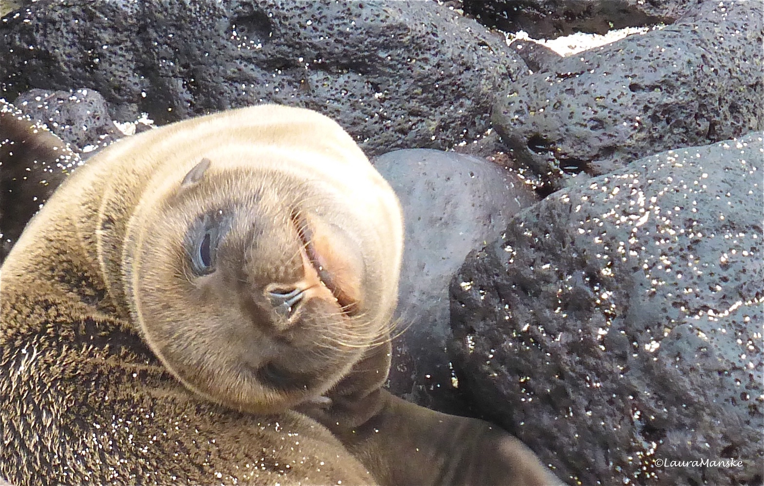 Funny Thoughts Amp Fun Facts About Sea Lions Plus Cute