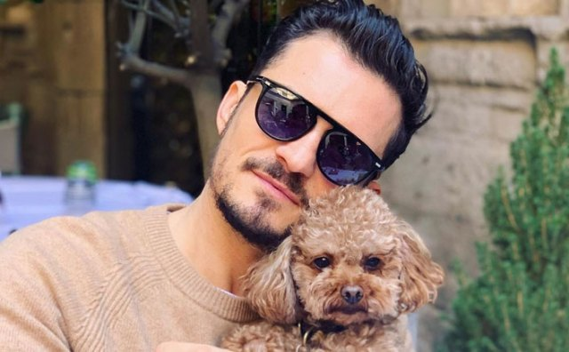 Orlando Bloom Is Broken As His Pet Dog Mighty Goes Missing ...