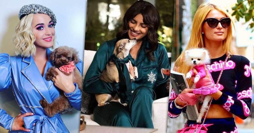 This National Pet Day, Check Out How Stylish Priyanka Chopra Jonas, Katy Perry & Paris Hilton's Pets Are