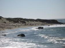 Seeelefanten-Kolonie