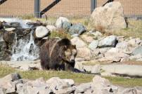 Bear and Wolf Recovery Center