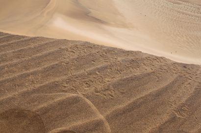 Tierspuren im Sand.