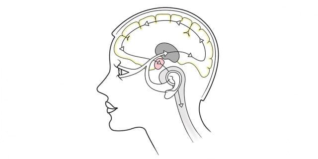 Avez-vous une mémoire visuelle, émotionnelle ou auditive