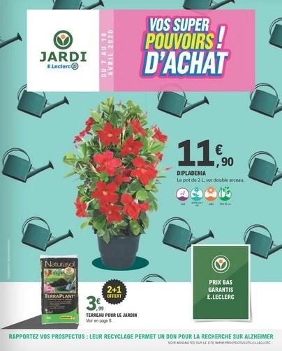 plantes aromatiques en pot de 1 litre