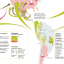 These Astonishing Maps Show How Hard Drugs Are Produced