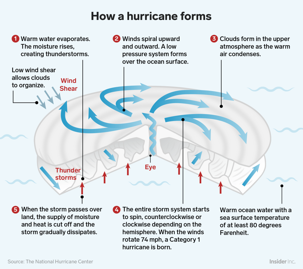 medium resolution of how hurricane forms infographic