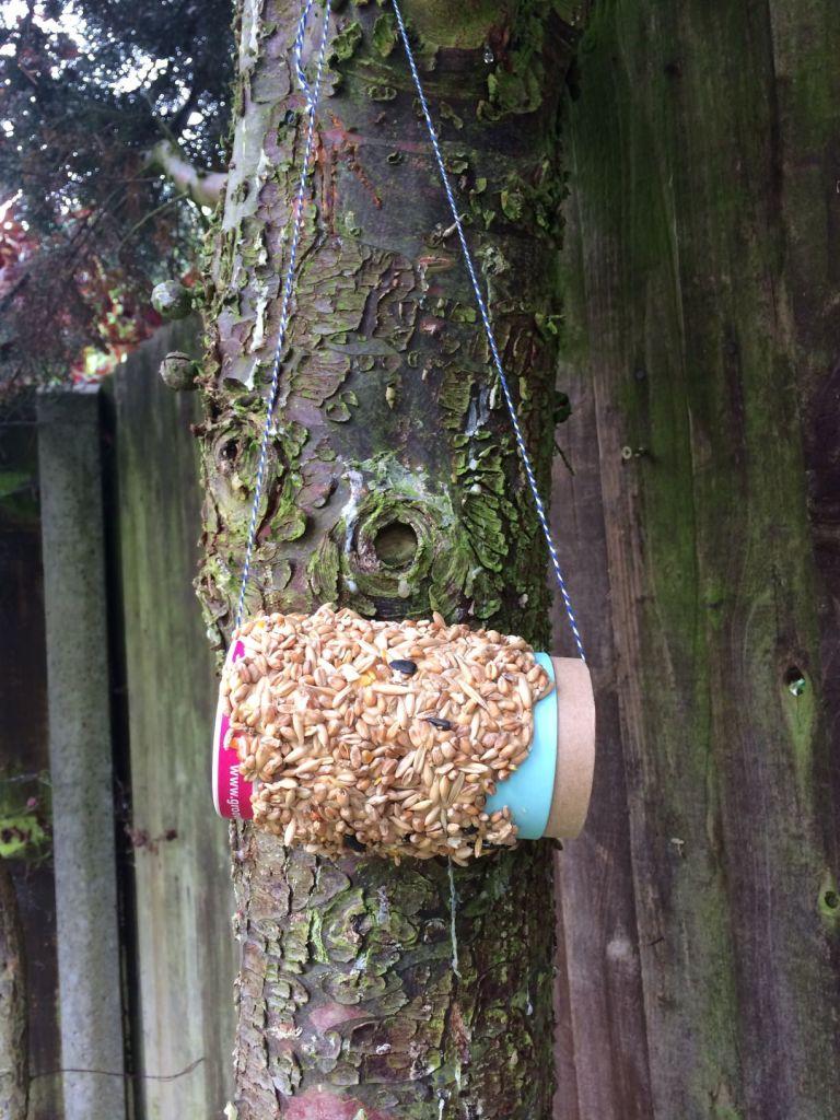groove bulb bird feeder (5)
