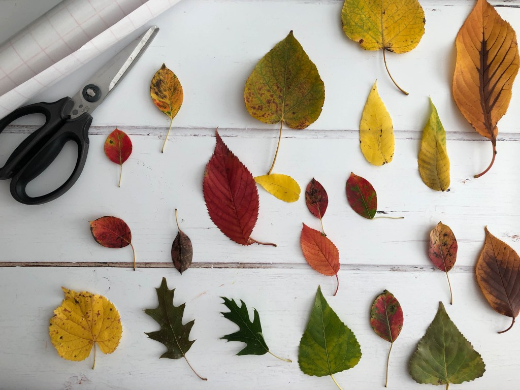 Using leaves to make an autumnal sun catcher