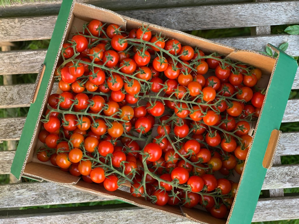 British piccolo tomatoes which were supplied by Glinwell, a British tomato nursery