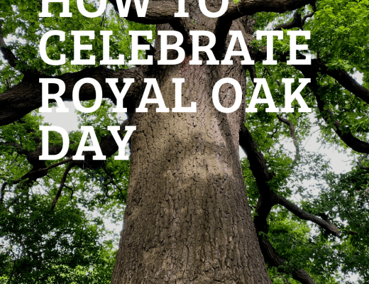 How to celebrate Oak Apple Day or Royal Oak Day