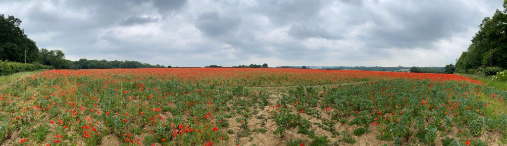 A trip to the poppy fields near Welwyn, Hertfordshire