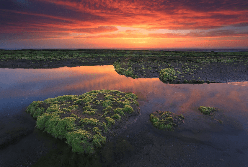rode zonsondergang over de zee met groene overstroomde velden op de voorgrond