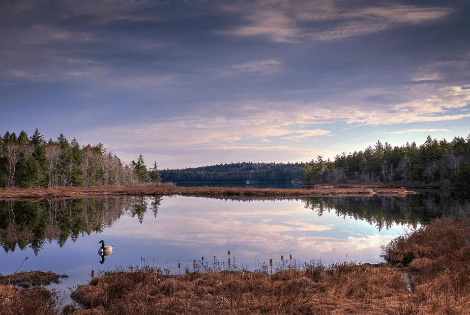 zonsondergang over een meer omgeven door bomen met een eend zwemmen