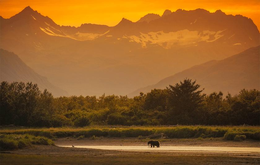 bruine beer met een vis op een kleine rivier als de gele zonsondergang valt over de bergen