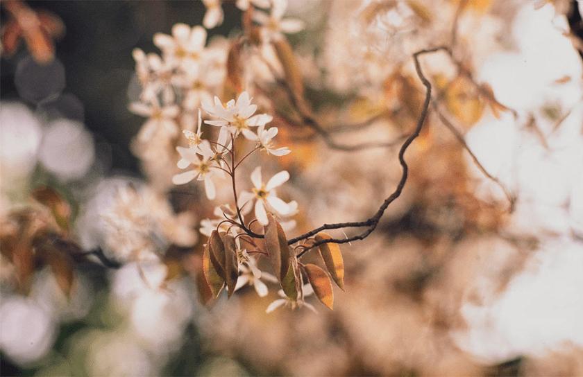 kleine witte bloemen met bokeh achtergrond