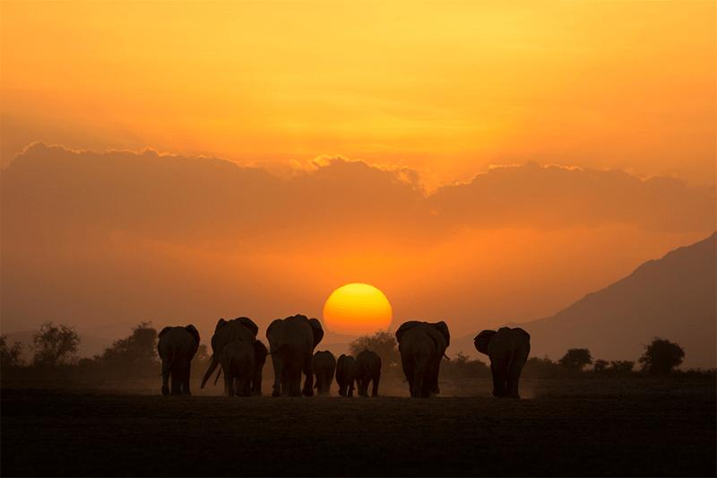 pak olifanten lopen naar de zon als de zonsondergang de horizon bereikt