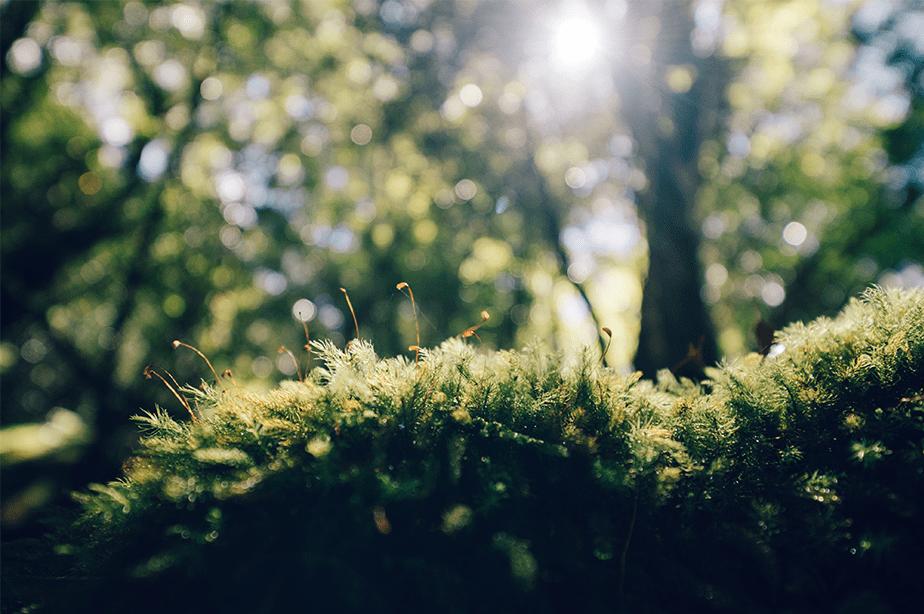 zonlicht dat op het groene mos met kleine kleine installaties en bokeh bosachtergrond valt