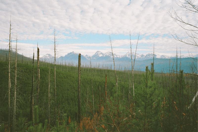 filmfoto van een groen bos van bovenaf gezien met gesneeuwde bergen aan de horizon