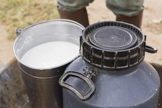 galão de leite, origem animal