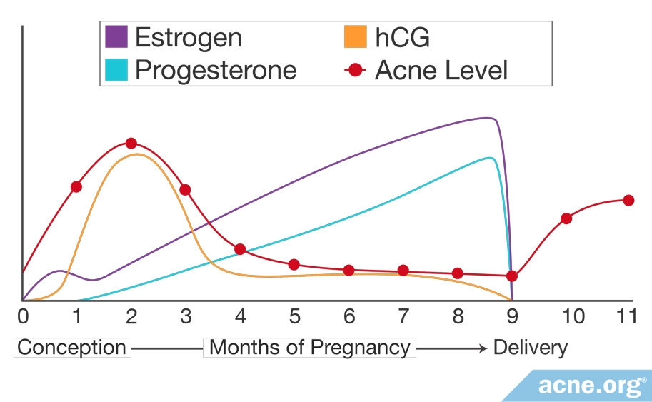hormonal acne diagram dodge ram wiring diagrams women and female org graph showing hormone levels during pregnancy
