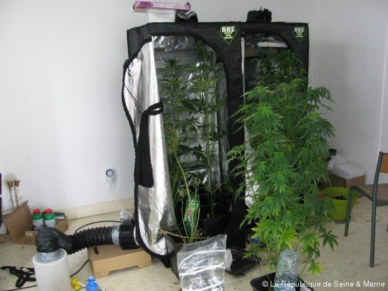 Deux Tudiants Sadonnaient La Culture De Cannabis Actufr