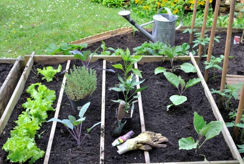 jardin cinq conseils pour reussir son