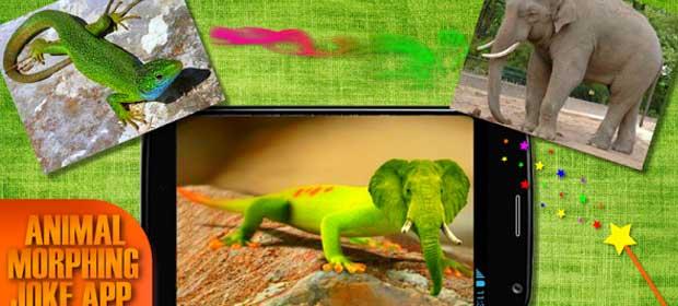 Morph animals Hybrids Face