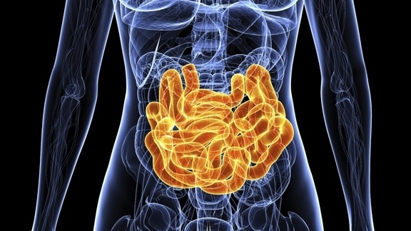 Feedback loop helps your gut manage its helpful bacteria