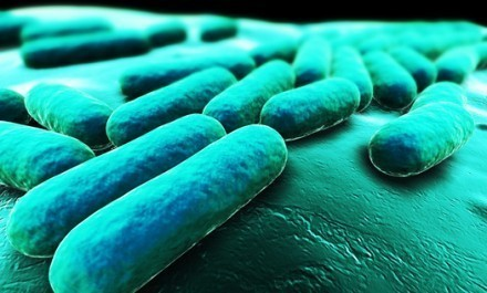 Rise in allergies linked to war on bacteria