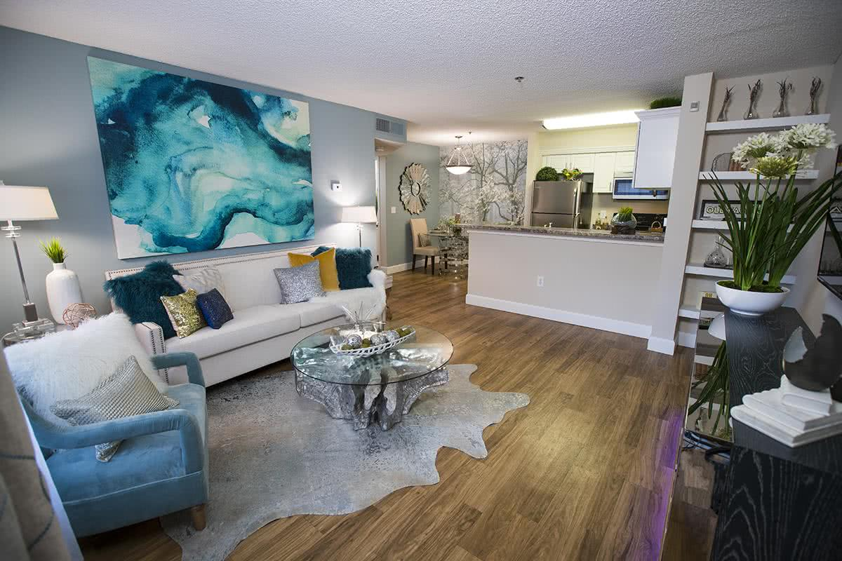 Tampa FL Apartments for Rent Near USF  Allister Place