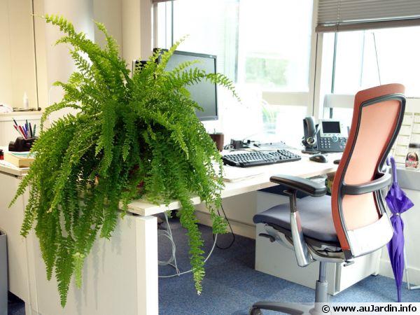 des plantes pour le bureau la fougere de boston dans un bureau lumineux