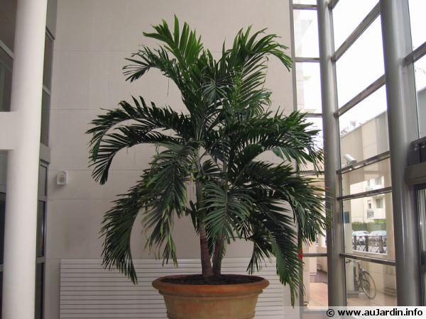 10 plantes d interieur fleuries faciles