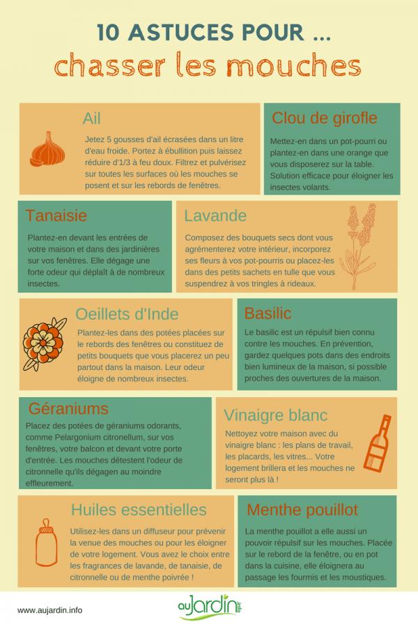 Comment Faire Fuir Les Mouches : comment, faire, mouches, Astuces, Chasser, Mouches