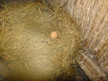 This is today's egg...Sitting on a bale of hay, less than a foot away from the grain bucket!