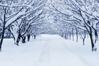 7 Tips for Taking Photographs in the Snow | B&H Explora