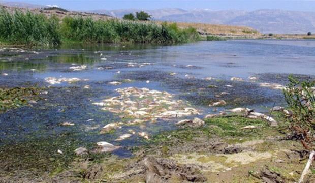 Fabrika atıklarının kirlettiği çayda yüzlerce balık kıyıya vurdu