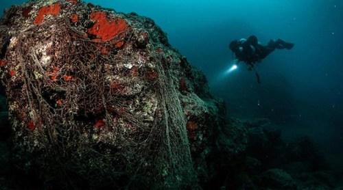 Plastikler deniz canlılarını tehdit ediyor