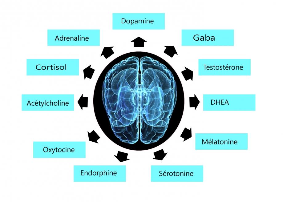 Neuromedia.jpg