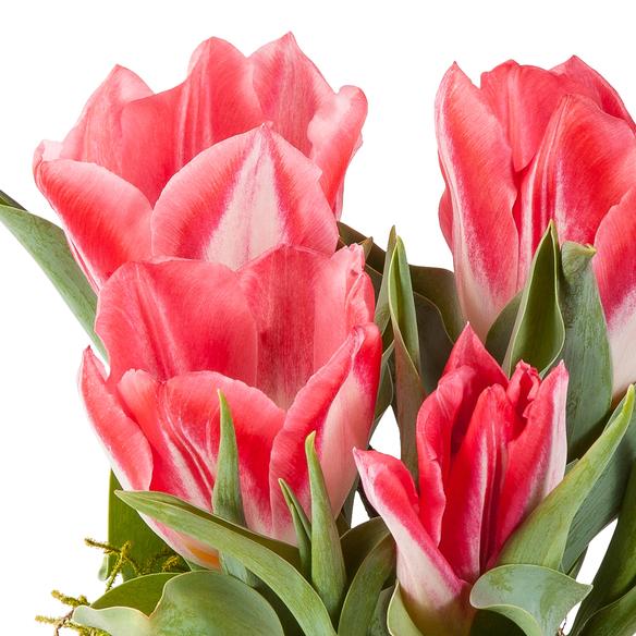 Tulpen in Rot und Wei im bertopf  Blume2000de