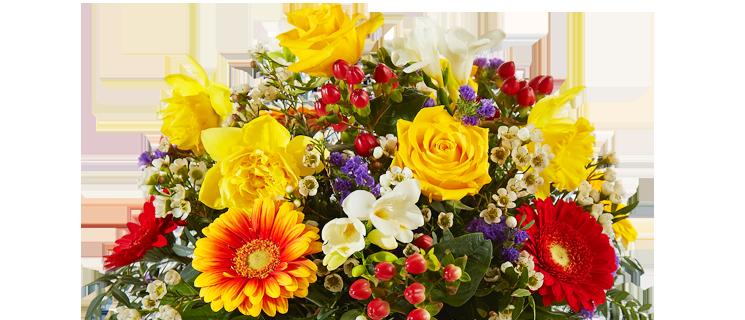 Weihnachtsblumen online bestellen  versenden  Blume2000de