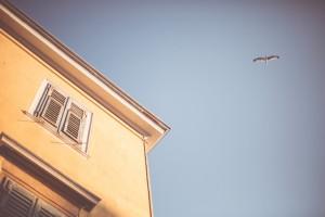 House with Bird