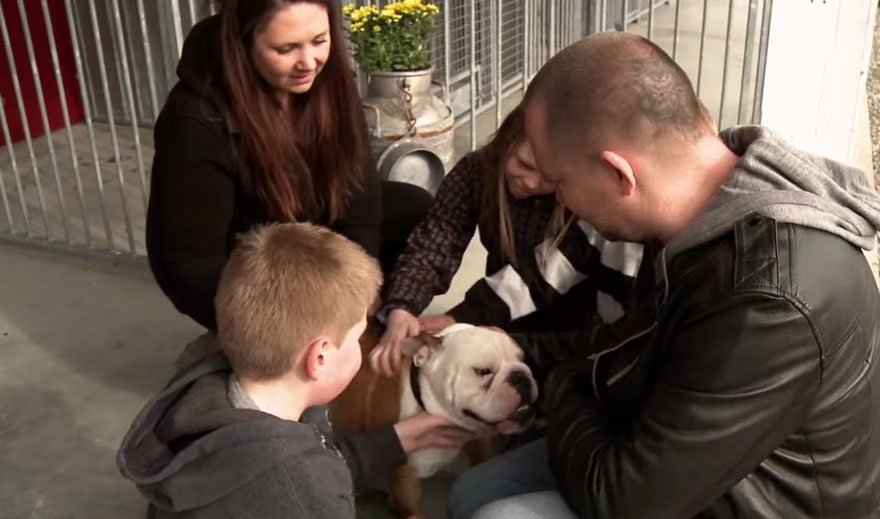 bulldog-love-story-house-11