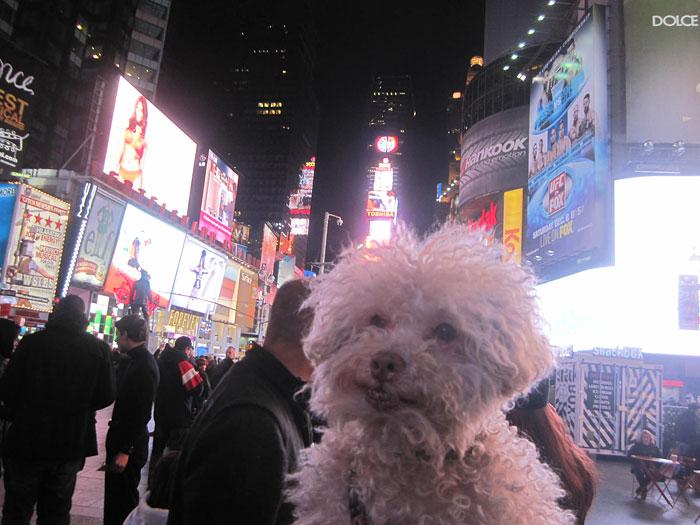 cerbero-on-the-road-cute-poodle-11