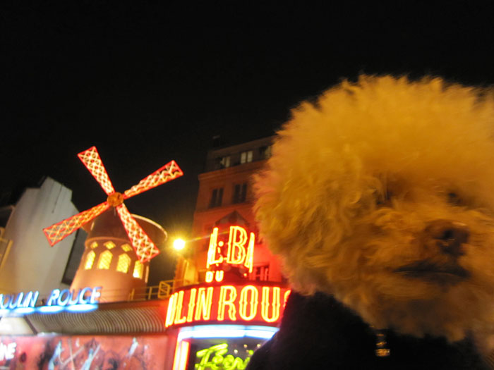 cerbero-on-the-road-cute-poodle-8
