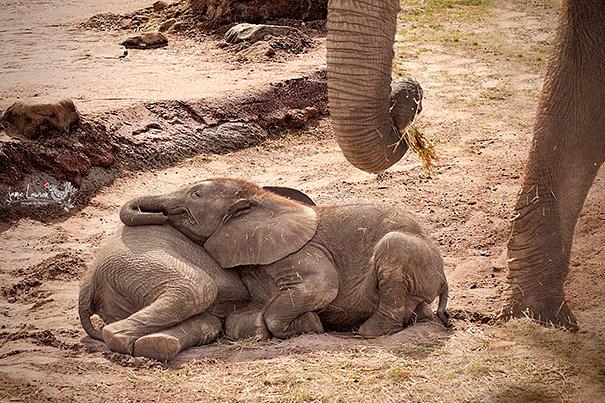 cute-animals-sleeping-pillows-27