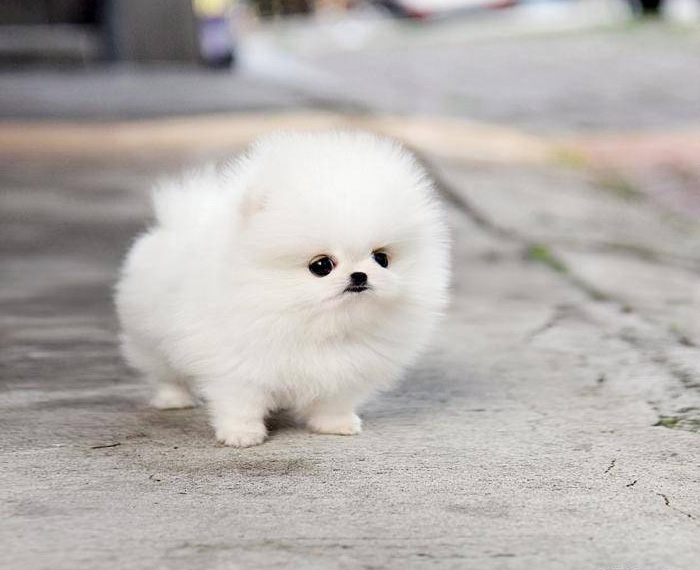 These 16 Fluffy Animals Will Make You Say Awww Bored Panda