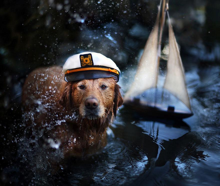 dog-photography-chuppy-golden-retriever-jessica-trinh-10