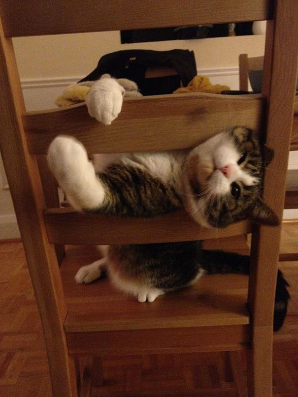 funny-cats-dogs-stuck-furniture-10