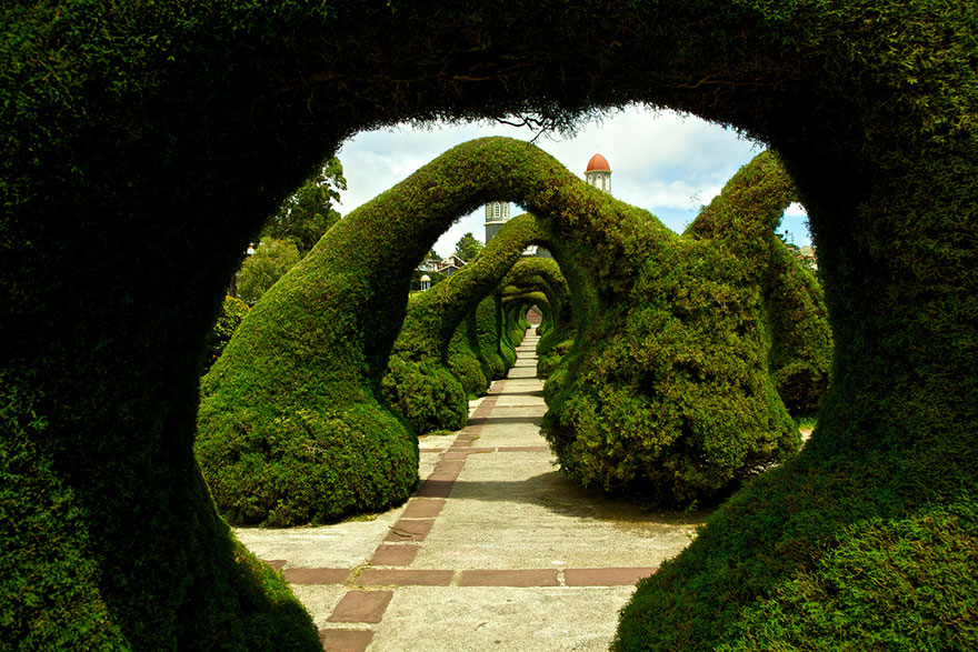 amazing-tree-tunnels-23