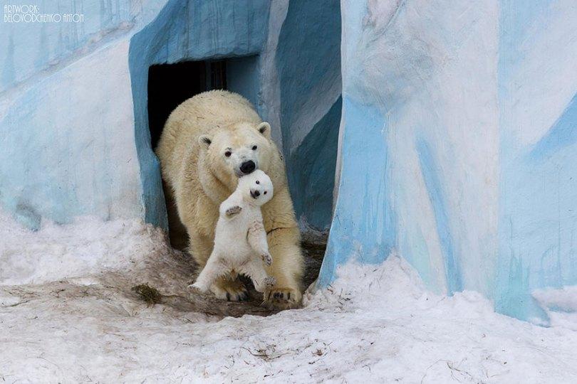 animal parents 3 1 - Momentos adoráveis dos pais com os filhotes no reino animal
